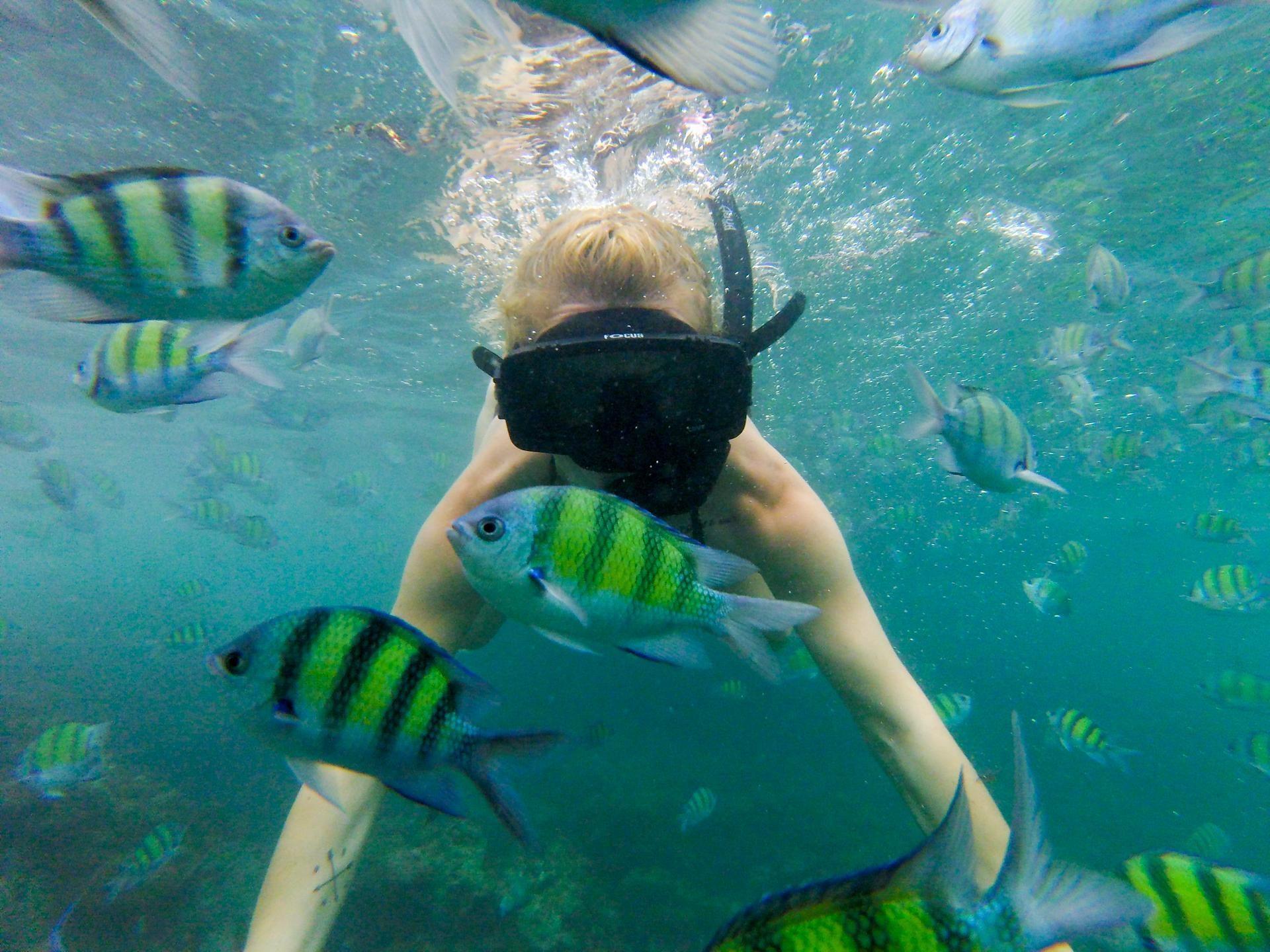 Snorklanje na otoku Phi Phi, Tajska