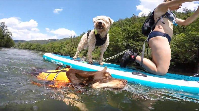 Nekateri psi so raje v vodi, kot na supu