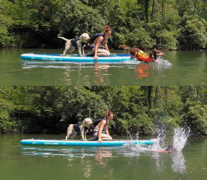 Psi imajo svoj način dojemanja sveta in dražljajev iz okolja, ki jih lastniki včasih težje razumemo.