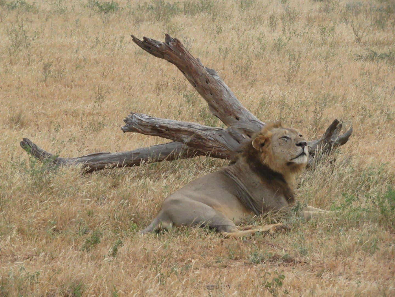 Safari Kenija