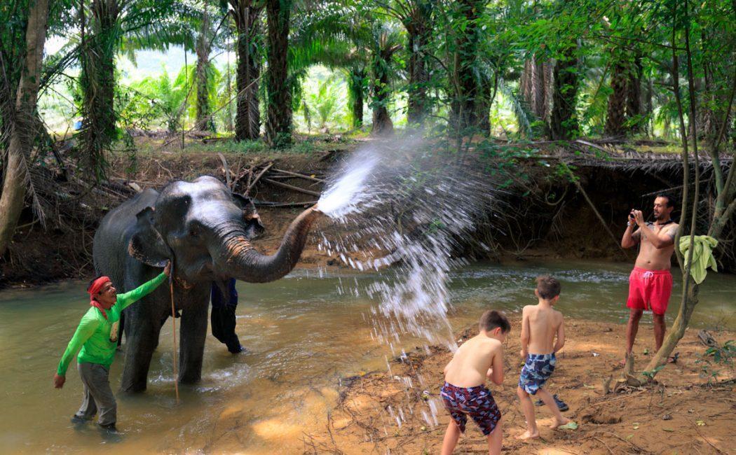 Umivanje in hranjenje slonov
