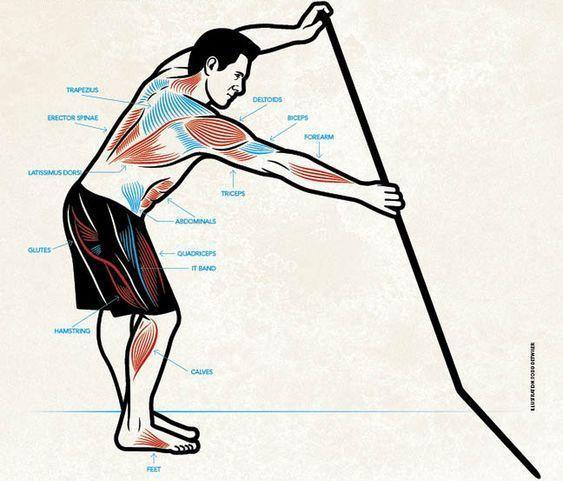 Mišice, ki jih uporabljamo pri supanju - SupTheMag