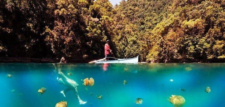 Plavanje in supanje z meduzami