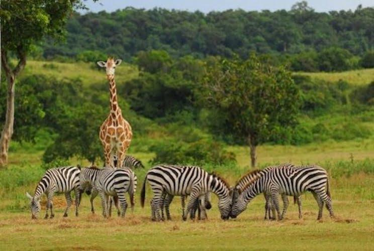 Safari izkušanja na otoku Calcauit
