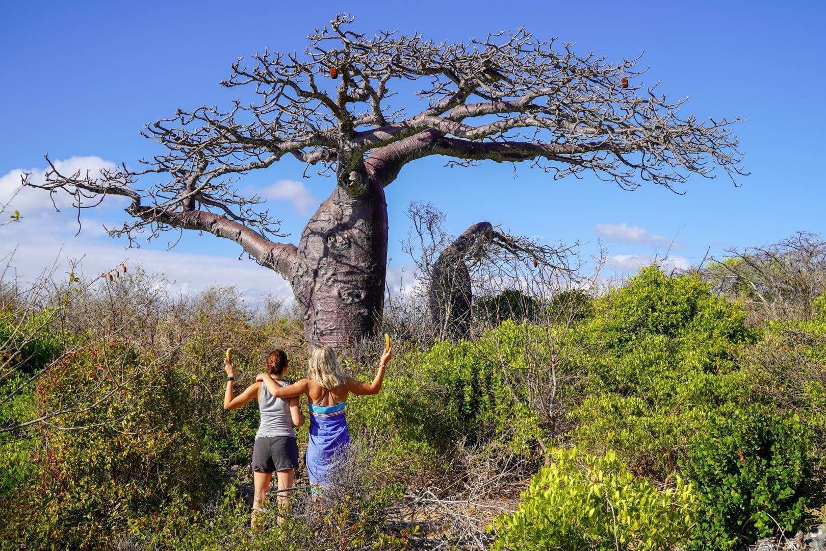 Eden in edini baobab na severu
