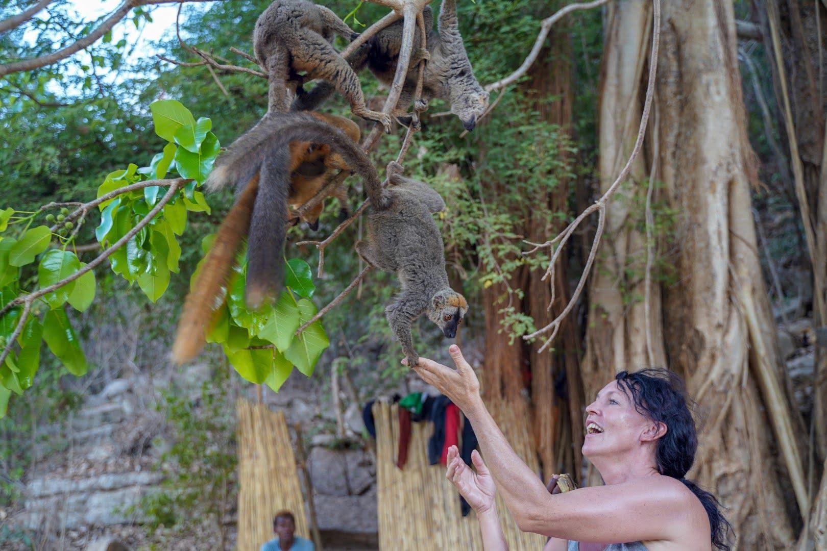 Prisrčni lemurji obožujejo banano