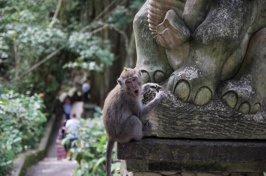 Opičji gozd v Ubudu