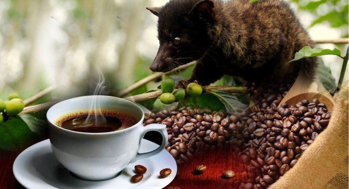 Najdražja kava na svetu